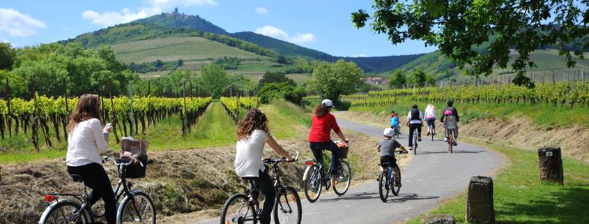 Bicycle ride Alsace wine road, Alsace wine route
